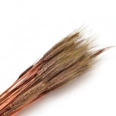 Especia marrón