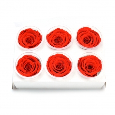 Conjunto de 6 rosas criogénicas - Rojo brillante