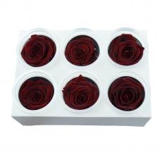 Conjunto de 6 rosas criogénicas - Rojo oscuro