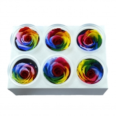 Conjunto de 6 rosas criogénicas - Modelo arcoíris 1