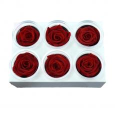 Conjunto de 6 rosas criogénicas - Rojo C21-94