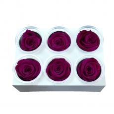 Conjunto de 6 rosas criogénicas - Fucsia