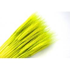 Especia verde claro