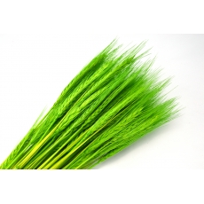 Especia verde