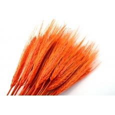 Especia de naranja