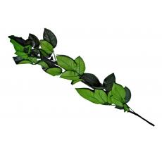 Tallo para rosas criogénicas 60 cm