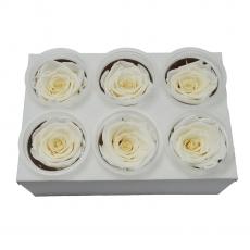 Conjunto de 6 rosas criogénicas - blancas C21-99