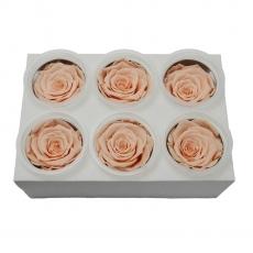 Conjunto de 6 rosas criogénicas - Melocotón
