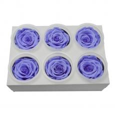 Conjunto de 6 rosas criogénicas - lila C21-96