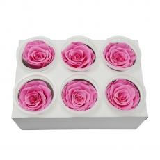 Conjunto de 6 rosas criogénicas - rosa C21-93