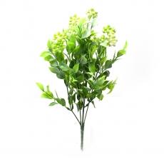 Kalanchoe grande verde con blanco