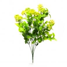 Kalanchoe grande verde con amarillo