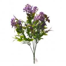 Kalanchoe grande verde con lila